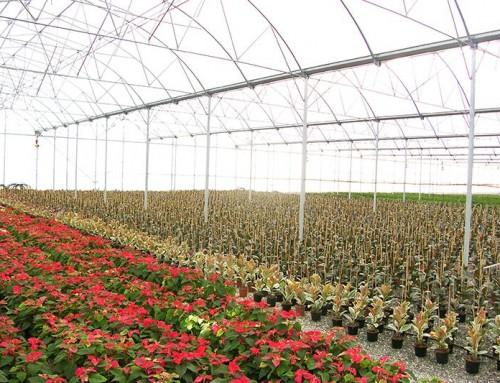 Çiçek Serası Adana
