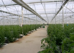 Topraksız Tarım Serası Yapan Firma