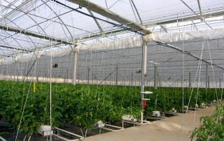 Topraksız Tarım Maliyeti