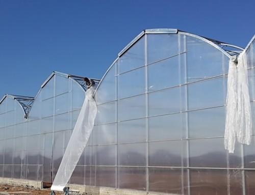 Süs Bitkileri Serası IRAK