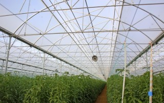 tohum serası yapan firmalar aksu