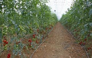 antalya tohum üretim serası